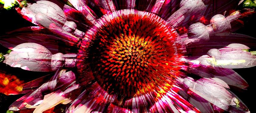 """technicolor"" by gbmediadesign"